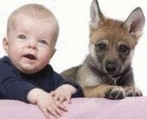 Enfant Et Chien Tout Pratique