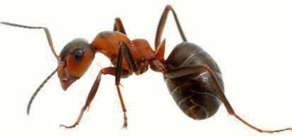 Les fourmis comment s 39 en d barrasser tout pratique - Comment se debarrasser des fourmis dans le jardin ...