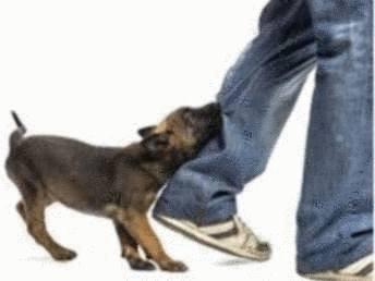 Morsure chien que faire - Tout pratique